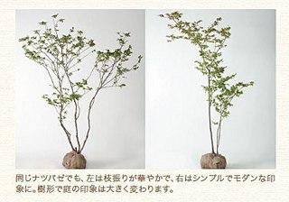 購入する植栽・苗の現在の樹形を見る